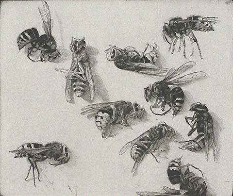 """Hornets - JAKOB DEMUS - Diamond drypoint, 1989, de Heer 202, edition 30. 5 1/8 x 5 7/8 in. Signed in pencil. """"I embarked on this engraving on my thirtieth birthday, in a mood that was bad-tempered and humorous, already beyond desperation, with the sting of Aristophanes."""""""
