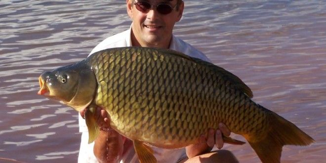 25 Best Ideas About Carp Fishing Tips On Pinterest Carp