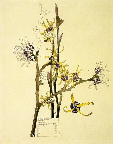 Charles Rennie Mackintosh. Japanese Witch Hazel. Walberswick, 1915. View 2.