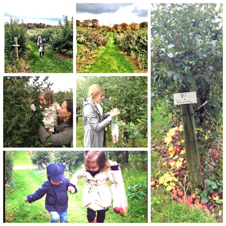 Teach kids when they are young where fresh, healthy food comes from! The earth, NOT McDonald's! #apples #fallharvest #foodrev #eathealthy