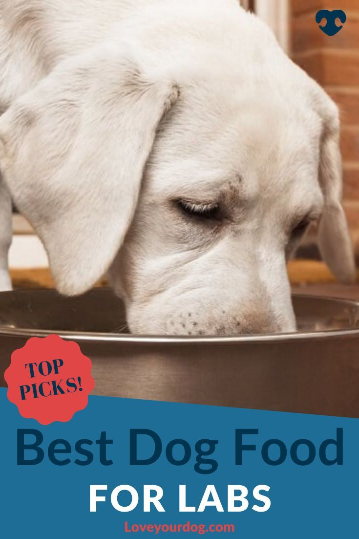 Best Dog Foods For Labrador Retrievers Puppies Adults Seniors In 2020 Dog Food Recipes Best Dog Food Labrador Dog Food