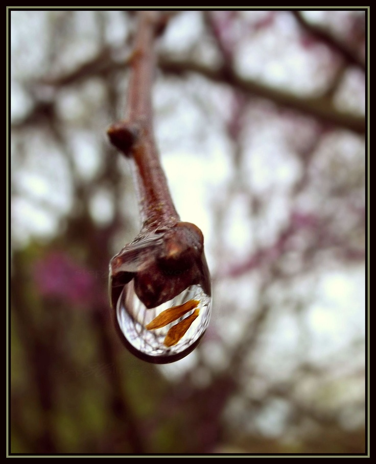 teeny tiny orange leaves inside water drop