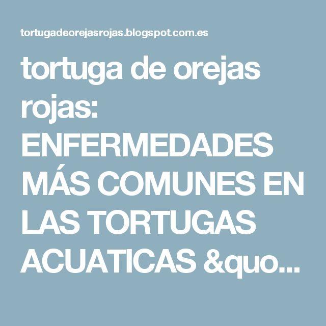 """tortuga de orejas rojas: ENFERMEDADES MÁS COMUNES EN LAS TORTUGAS ACUATICAS """"OREJAS ROJAS"""""""