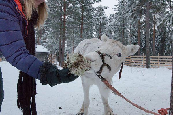 8 cosas para hacer en Navidad en Rovaniemi, el pueblo de Papá Noel – Buena Vibra