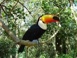 Resultado de imagem para florestas tropicais