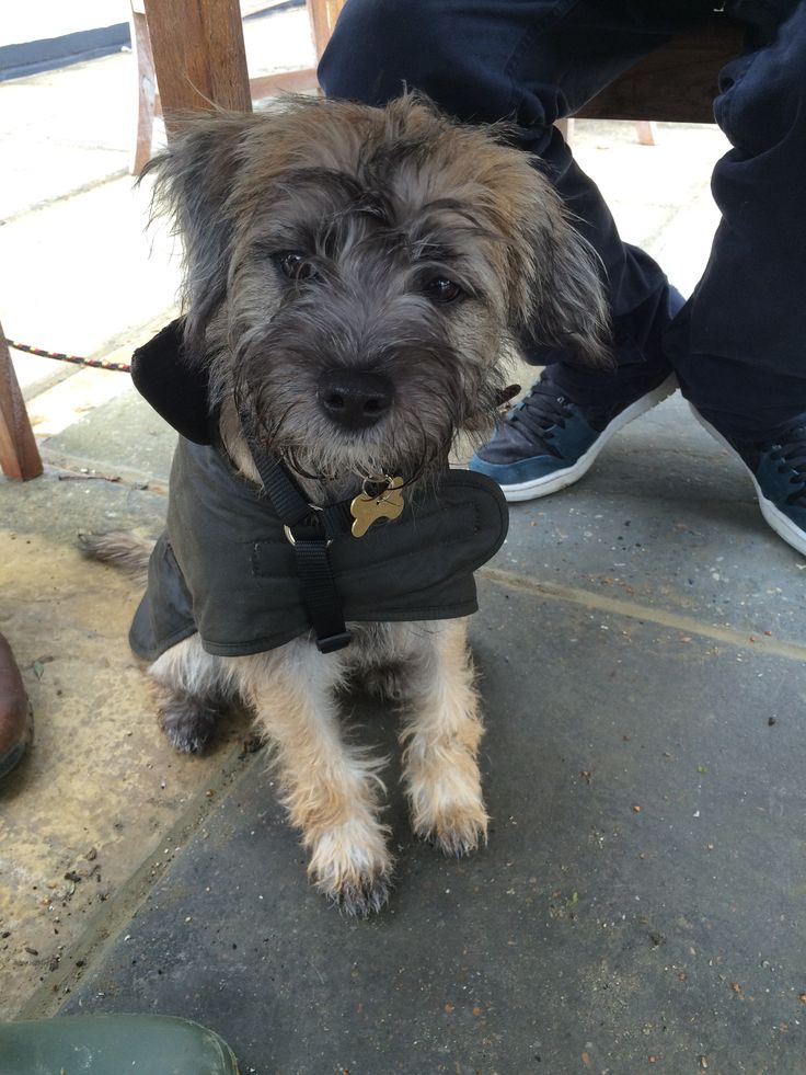 i love little doggy barbour coats!