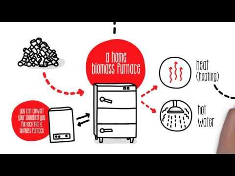 How does biomass work? - Sustainability - vnasean.com