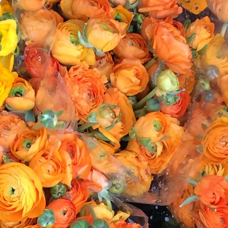 Orange Ranunculus in the Market Flower of # Amsterdam