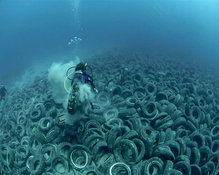 Sea creatures and ocean vistas: the watery world under threat - in pictures | So Wrong | Pinterest | Ocean, Ocean pollution and Earth