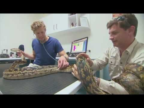 Cairns Snake Removals & Dr Chris Brown, Bondi Vet -  Cairns Snake Removals provide a rapid, professional snake removal service at Cairns and surrounding areas.Visit: https://www.youtube.com/watch?v=LiQv0TIq0IA