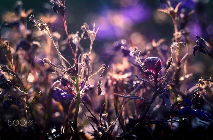 Temporary Peace 3 - Flower
