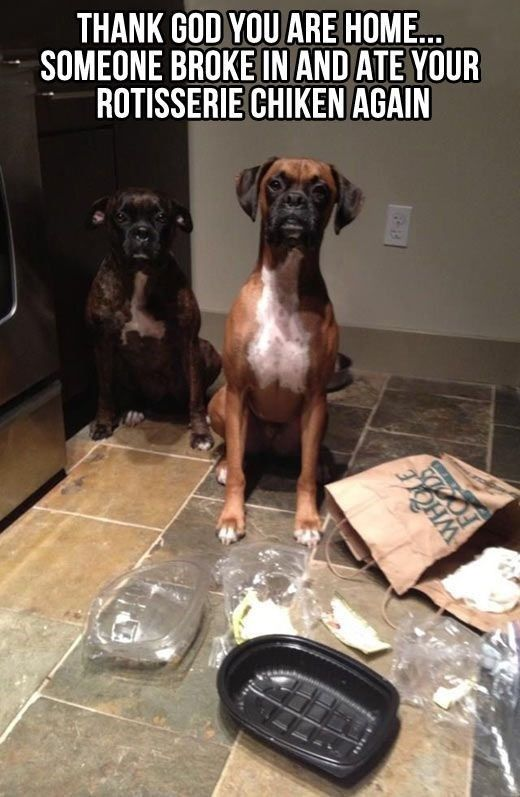 Things We Worry Our Dogs Will Do When We're Not Home
