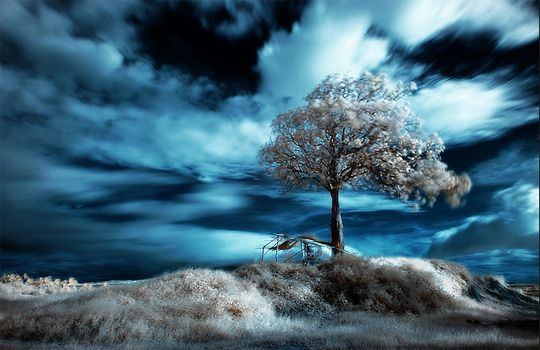 17 This picture is infrared photography!