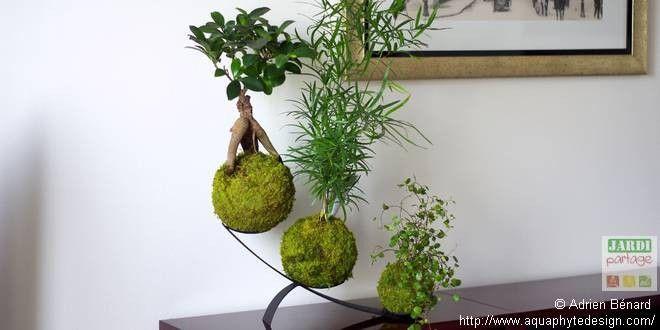 70 best kokedama moss ball images on pinterest gardening landscaping and plants. Black Bedroom Furniture Sets. Home Design Ideas