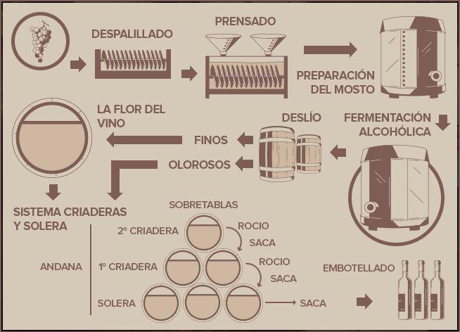 Elaboración de los vinos #Finos y #Olorosos. #Lustau
