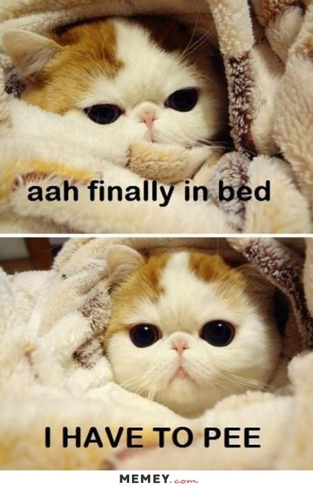 cute funny kitten memes - Google Search