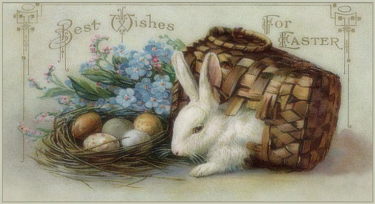 Best 25+ Bunny Images Ideas On Pinterest