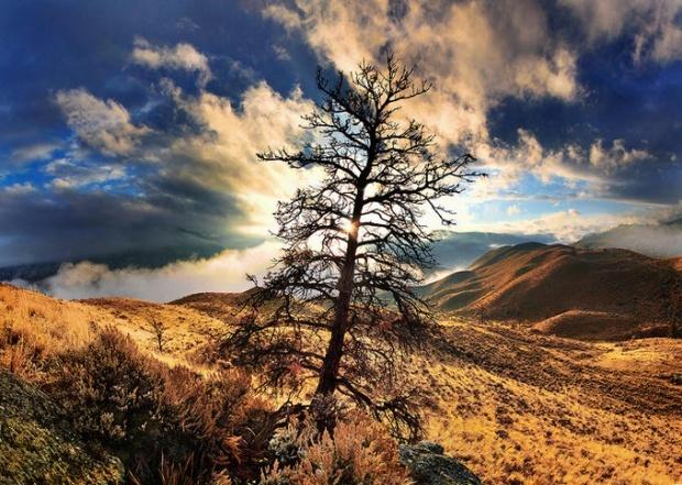 photo by Jeremy Jackson: Photos, Shelters Trees, Landscape Photography 15, Single Trees, Incr Colornatur, Breathtak Landscape, Jeremy Jackson, Beautiful Things