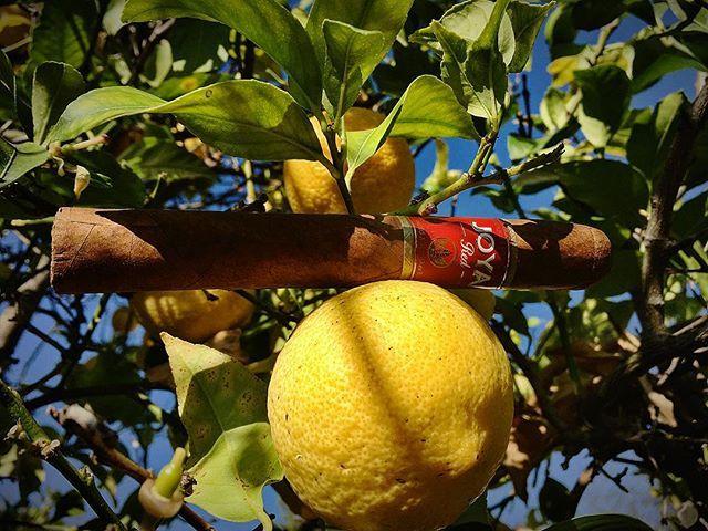 Under the lemon tree my Joya and me 😁 #joyacigars #joyacigar #esteli #nicaragua #cigar #cigars #cigarsnob #cigaraficionado #cigartime #cigarworld #cigarsociety #lemontree #lemon #california #ranchosantafe #ranchosantafeca #ranchosantafelocals #sandiegoconnection #sdlocals #rsflocals - posted by Kam Broumand  https://www.instagram.com/raymakb. See more post on Rancho Santa Fe at http://ranchosantafelocals.com
