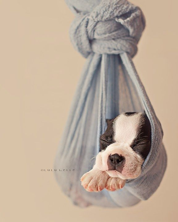 Community Post: This Newborn Puppy Photoshoot Will Make Your Day