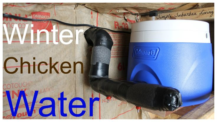 Winter Chicken Watering System - No cleaning, easy to fill, cheap, and e...
