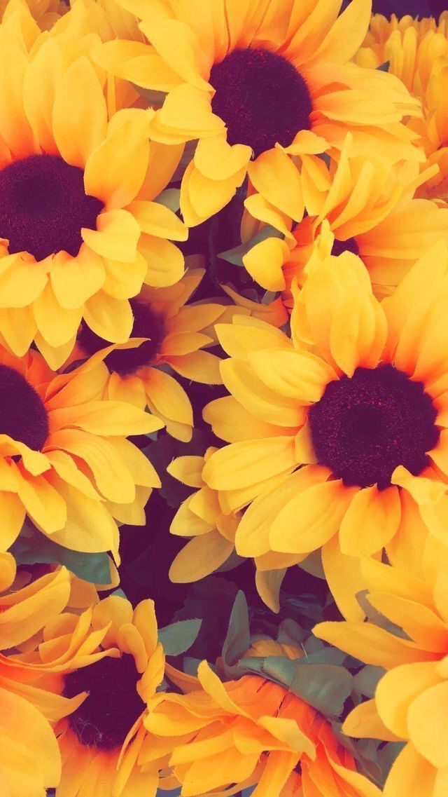 Pin By Merisa On Sunflower With Images Sunflower Wallpaper