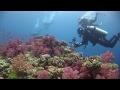 Great underwater cinematography