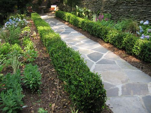 This simple irregular blue stone path leads down to the lower fireplace and terrace.  Pictured, are shrubs, a birdbath, planting beds and a small section of the 10' stacked stone retaining wall along the path (foreground) leading to another garden area not shown.  Other areas along the recessed pea gravel pathways are numerous 100-150- yr old primary growth hardwoods, specimen Crape Myrtles, Magnolias, Chinese & Blood-red maples, as well as, thousands of flowering plants!