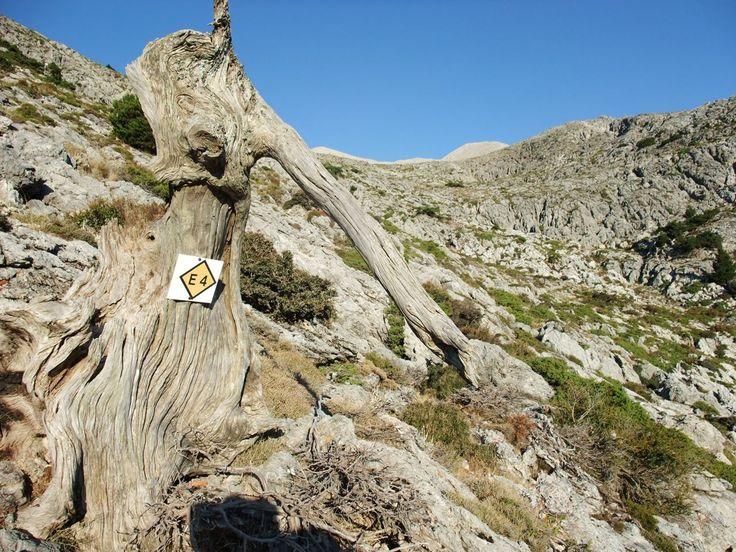 Explore the E4 paths in Crete - Unforgetable memories with dromolatis.gr