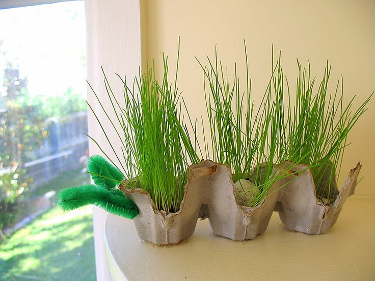Mr. Grass Caterpillar - recycle cardboard egg cartons for the body.  Perfect for science lesson and Earth Day!