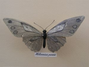 Heliconius Penne mixed media - $99