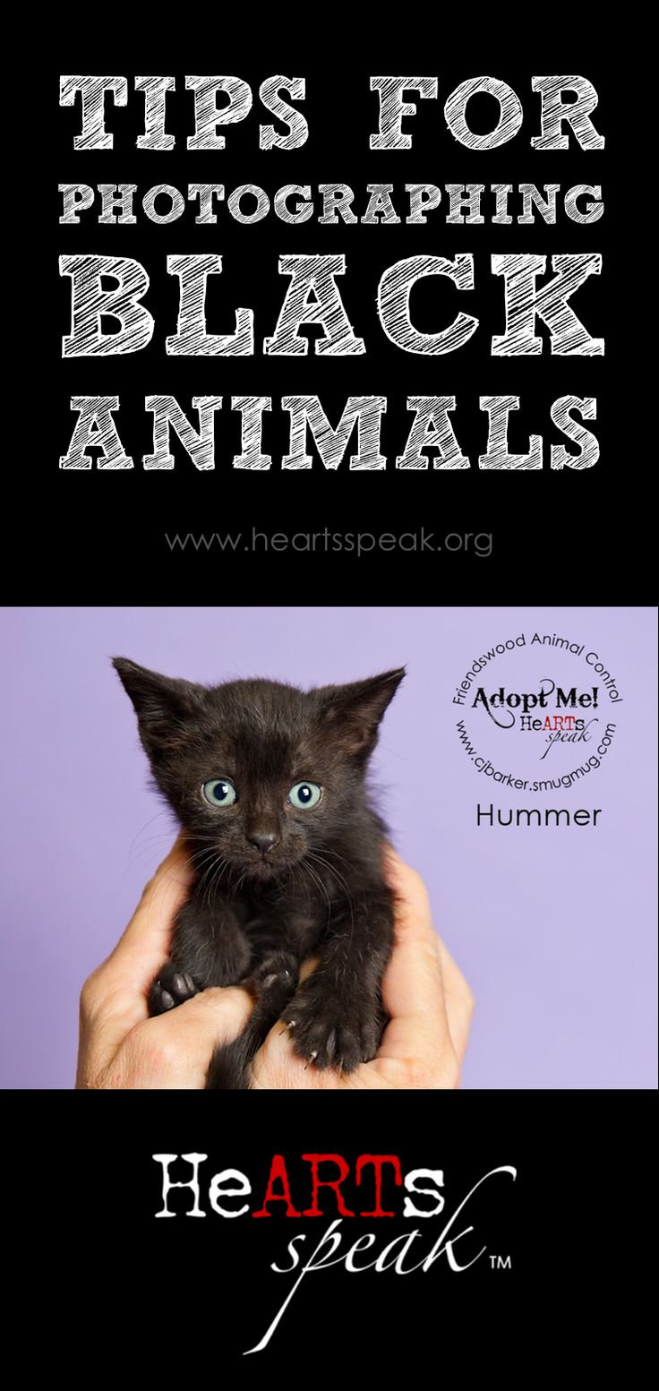 17 best images about pet adoption marketing ideas rescue photographers don t fear the black fur we have some tips for