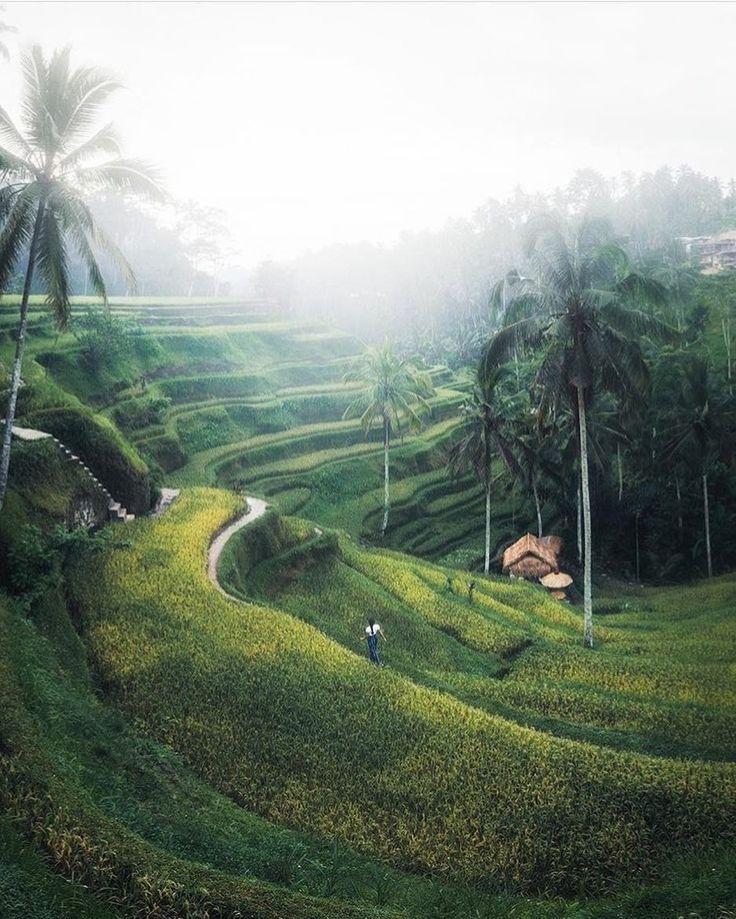 Forever in love with our island home || Bali asli via @chelseakauai  #thisisbali #baliasli #beachgold