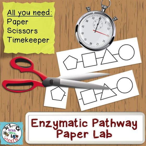 Enzyme Lab with just paper, scissors, and some sort of time keeper.  Students will truly understand enzyme specificity and learn how to graph reaction rates!
