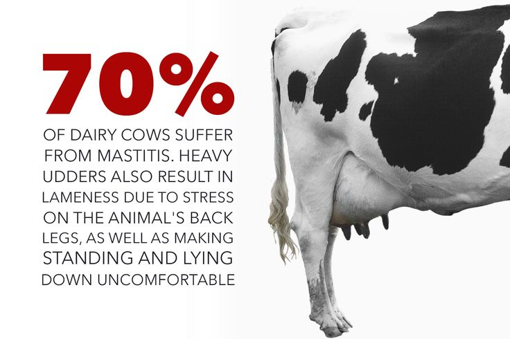 Cows suffer daily so we can drink the milk meant for their calves; 70% of dairy cows suffer from heavy udders, also result in lameness due to stress on the animal's back legs as well as making standing and lying down uncomfortable; why finance cruelty; live #vegan cruelty free