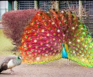 real red peacock - Google Search