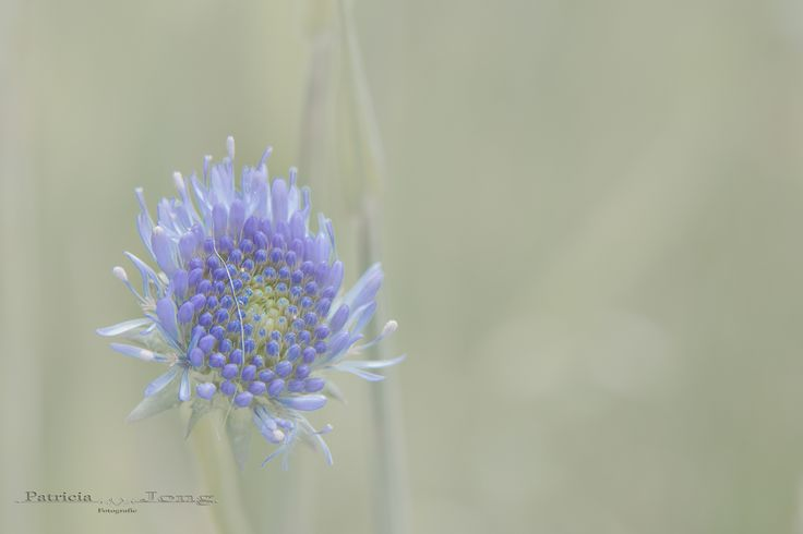 flower soft by patricia jong on 500px