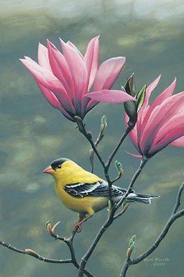 Mark Mueller Wildlife Art bird painting - goldfinch