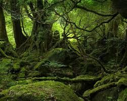 Image result for forest pics