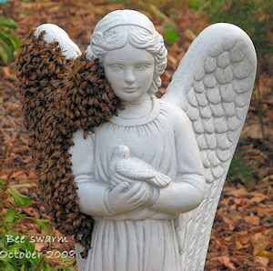angelic bee swarm