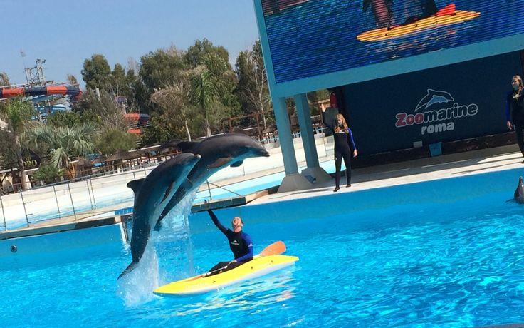 Zoomarine il parco divertimenti adatto a tutte le stagioni! Siamo andati allo zoo marine quando i miei bambini erano piccoli adesso più grandi è meglio http://super-mamme.it/2017/09/26/zoomarine-il-parco-divertimenti-adatto-a-tutte-le-stagioni/