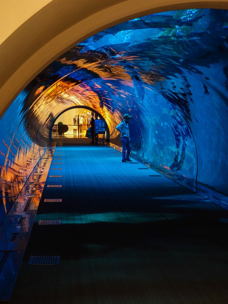 Aquarium de Dubai dans le Dubai Mall #dubaiblogtrip