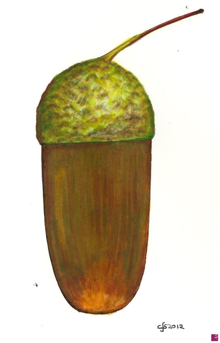 pigna di Francesco L'artennista
