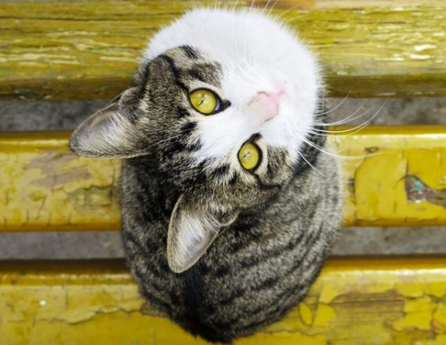The most popular cat names - did your cat's name make the list? https://www.catsandmeows.com/2017/06/10-popular-cat-names/