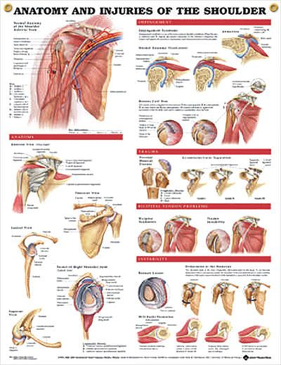 Anatomy and Injuries of the Shoulder anatomy poster shows views of the shoulder anatomy, impingement, rotator cuff tear, trauma and bicipital tendon.