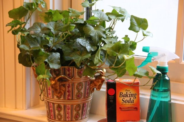 Use this simple recipe to keep your houseplants' leaves shiny and clean.