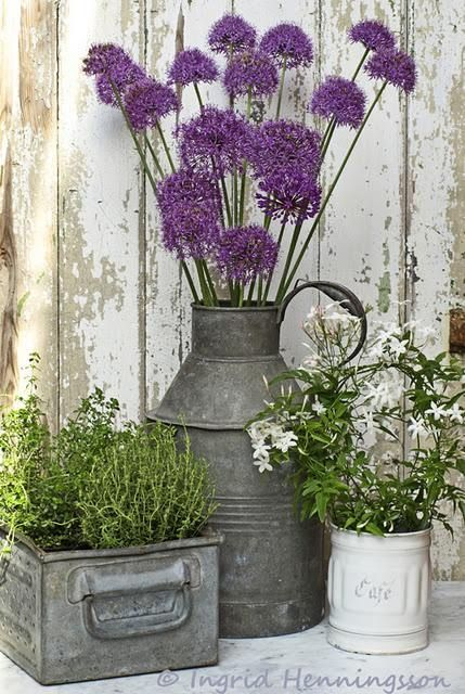 Striking purple allium and a few other accent plants in re-purposed containers