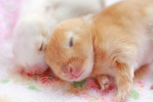 Two baby rabbits cuddled together sleeping. #animals # ...