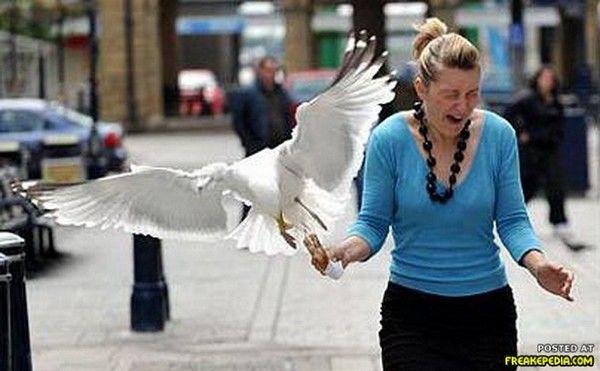 When Birds Attack People - jesad.com | Birds Are Evil ...