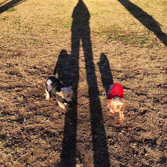 初日の出からの影法師 足なが〜い☺️ 愛犬達からも 明けましておめでとうございます。🐶☺️ 元旦からいい天気で嬉しいです。 今年も、皆様が健康で幸せでありますように。( ´ ▽ ` )  #横浜エステ  #2Bbioトリートメント  #本牧山頂公園  #初日の出  #愛犬  #健康  #ビューティー  #マイナス10才肌